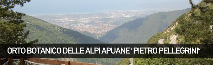 Orto Botanico delle Alpi Apuane Pietro Pellegrini