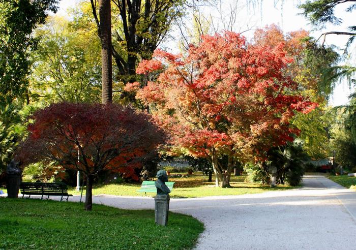 Risultati immagini per alberi ultracentenari orto botanico di roma