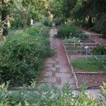 Settore dedicato alle piante officinali