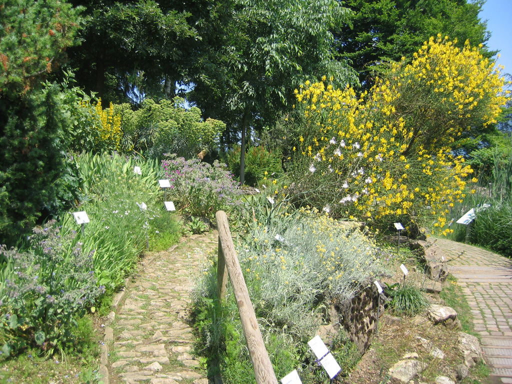 Orto botanico di bergamo lorenzo rota orto botanico d 39 italia - Piante mediterranee da giardino ...
