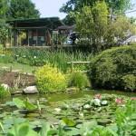 Il laghetto delle piante acquatiche esotiche