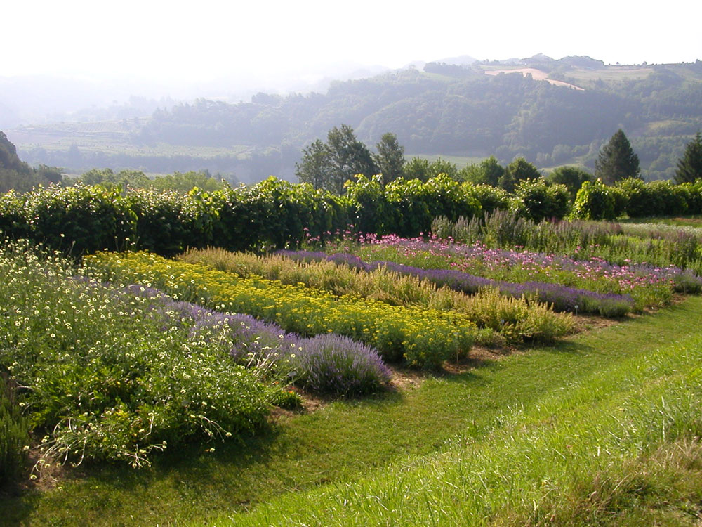 giardino delle erbe augusto rinaldi ceroni orto botanico On giardino officinale