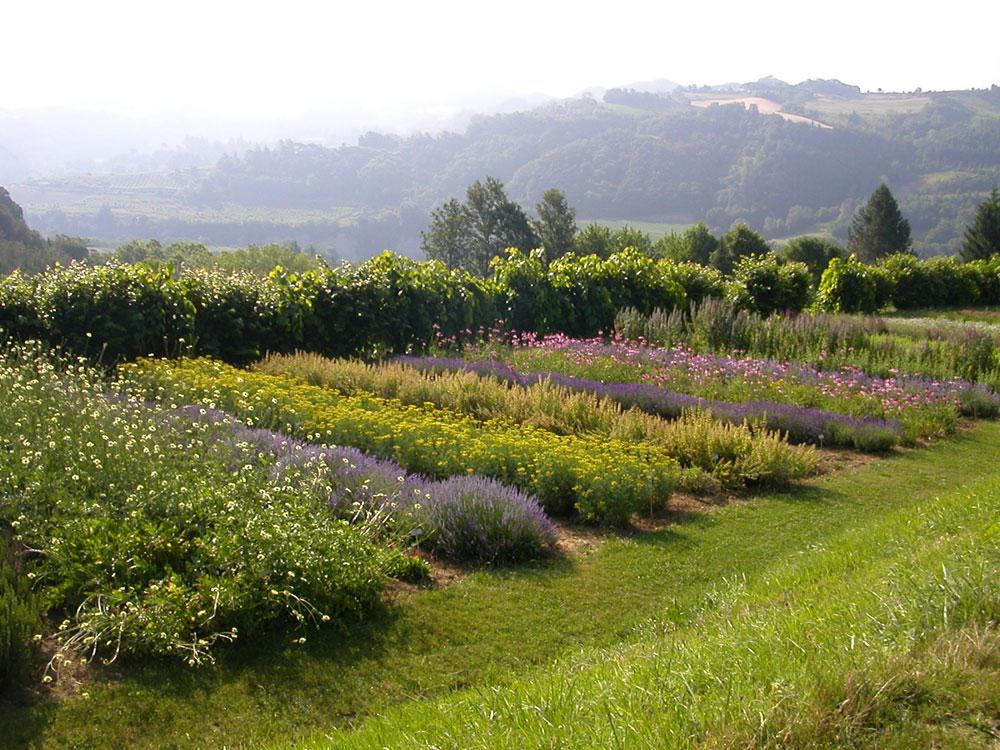 Piante Aromatiche Perenni Elenco : Giardino delle erbe augusto rinaldi ceroni orto botanico