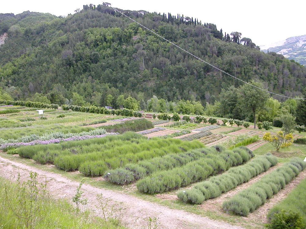 Giardino delle erbe augusto rinaldi ceroni orto botanico for Orto giardino