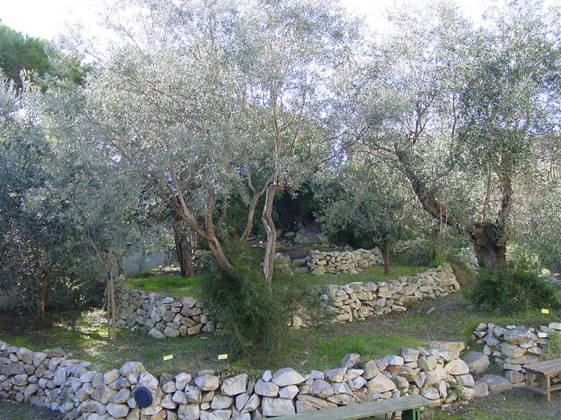 Orto botanico del museo di storia naturale del - Terrazzamenti giardino ...