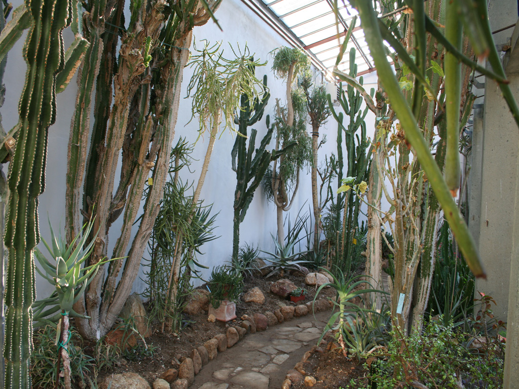 Orto botanico di lucca orto botanico d 39 italia for Piante rare
