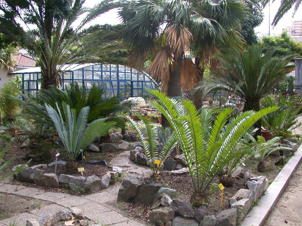 Orto botanico pietro castelli universit di messina for Aiuole con piante grasse
