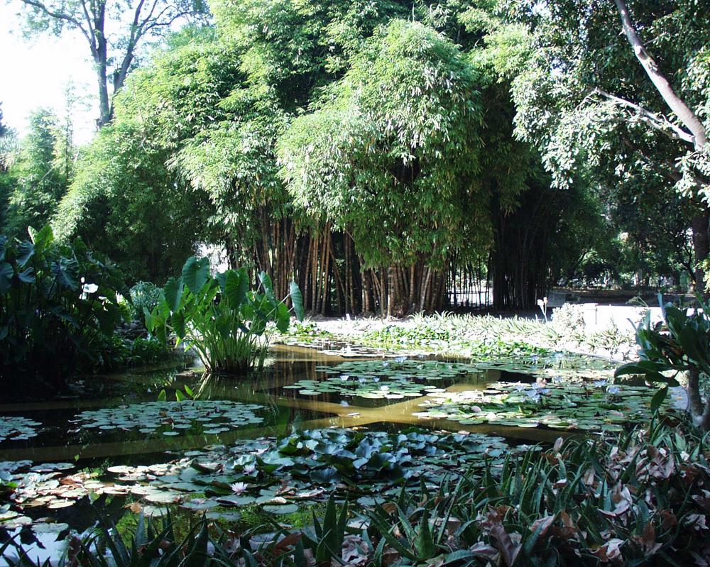 Orto Botanico Dell Universit Di Palermo Orto Botanico D 39 Italia