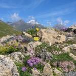 Roccera calcarea flora locale e M. Bianco